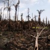 Niger Delta. Credit: Sosialistisk Ungdom (SU)/CC-BY-ND-2.0