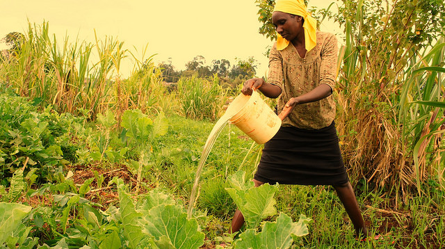 This woman, a resident of Ngangarithi village in central Kenya, uses fresh water from the surrounding wetlands to irrigate her crops. Credit: Miriam Gathigah/IPS